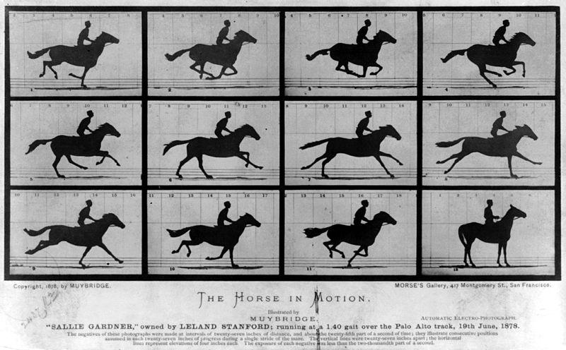 """""""The Horse in Motion di E. Muybridge. Illustrazione tratta da The Animal Locomotion."""""""